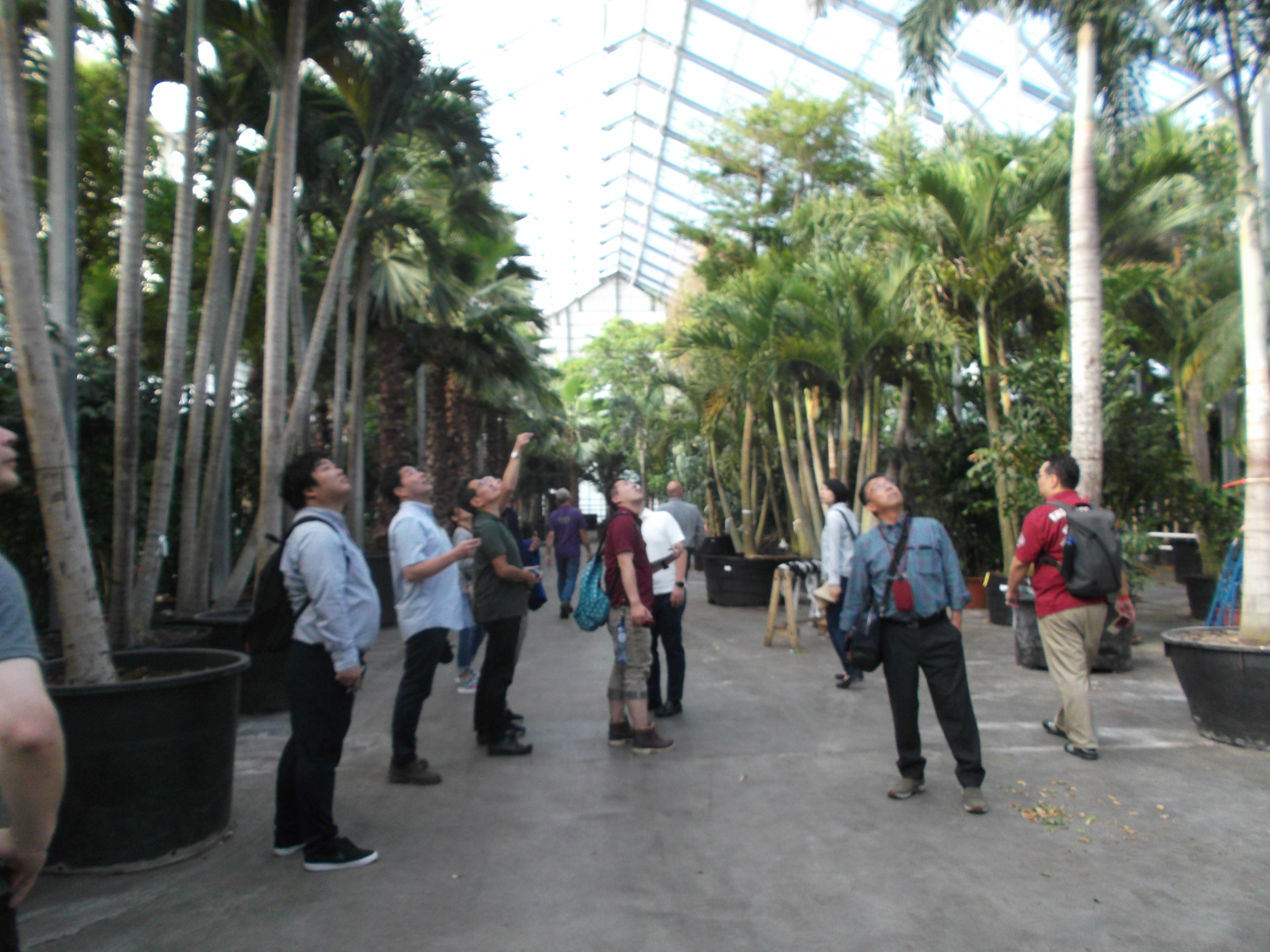 高さ14mの熱帯植物